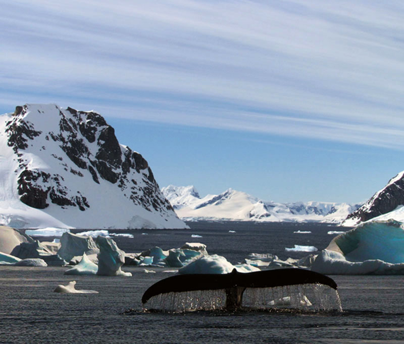 B.Ragland4On the Antarctic Peninsula