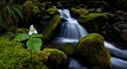 Jay Patel: Between a Rock and a Trillium