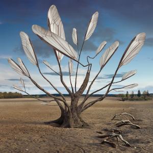 Dariusz Klimczak: Treewings