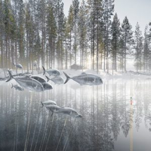 Alastair Magnaldo: Silver Fish in a Watery Forest